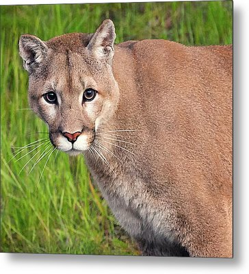 Kitty Look Metal Print