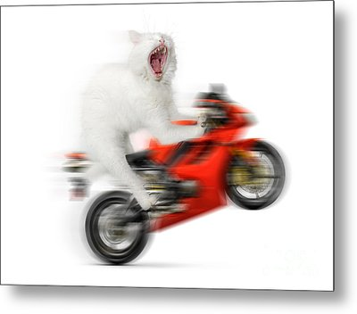 Kitty On A Motorcycle Doing A Wheelie Metal Print