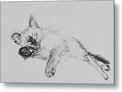 Kitty Metal Print by Vincent Alexander Booth