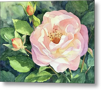 Knockout Rose And Buds Metal Print