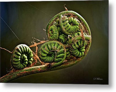 Knotted Metal Print by Christopher Holmes