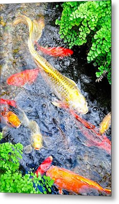 Koi Along The Maidenhair Ferns Metal Print