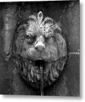 Koreshans Lion Metal Print by David Lee Thompson