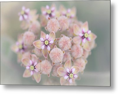 Metal Print featuring the photograph Kotolo Flowers by Alexander Kunz