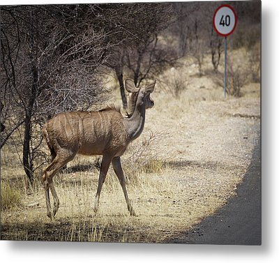 Metal Print featuring the photograph Kudu Crossing by Ernie Echols