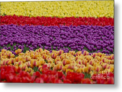 La Conner Bands Of Colour 2015 Metal Print by Maria Janicki