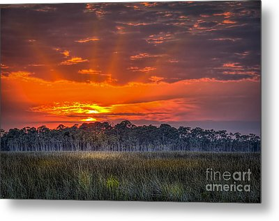 Labor Of Love Metal Print by Marvin Spates