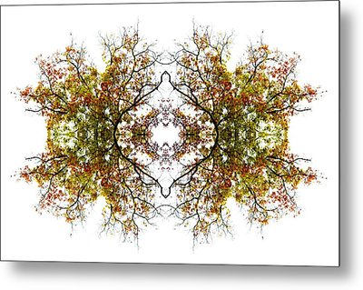 Lace Metal Print by Debra and Dave Vanderlaan
