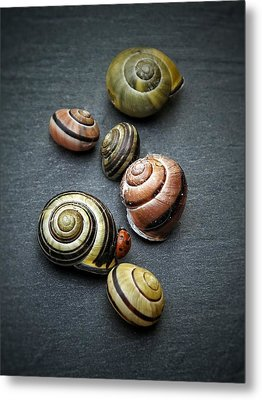 Lady Bug And Snail Shells 1 Metal Print by Karen Stahlros