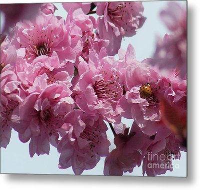 Metal Print featuring the photograph Lady Bug by Victor K