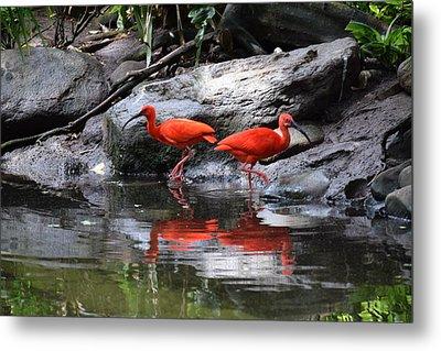 Scarlet Ibis 1 Metal Print
