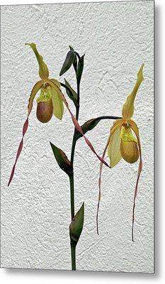 Lady Slipper Orchid Metal Print by Byron Varvarigos