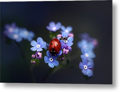 Ladybird And Ant Metal Print by Ellen van Deelen