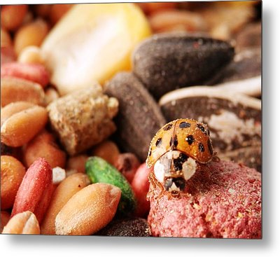 Lucky Ladybug At The Park Metal Print