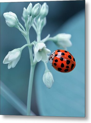 Metal Print featuring the photograph Ladybug by Mark Fuller