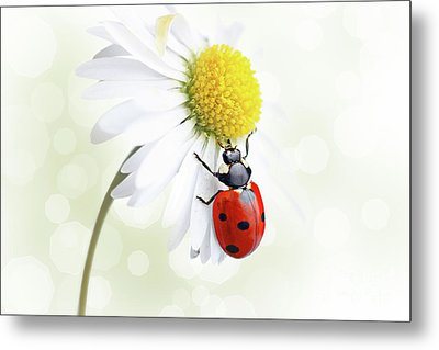 Ladybug On Daisy Flower Metal Print by Pics For Merch