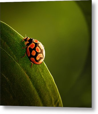 Ladybug  On Green Leaf Metal Print by Johan Swanepoel