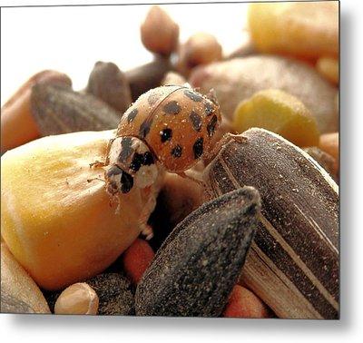 Ladybug On The Run Metal Print