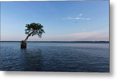 Lake Disston Cypress #2 Metal Print by Paul Rebmann