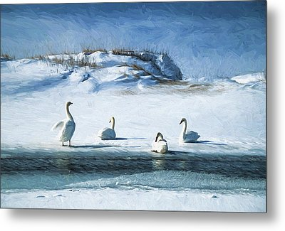 Lake Michigan Swans Metal Print by Dennis Cox