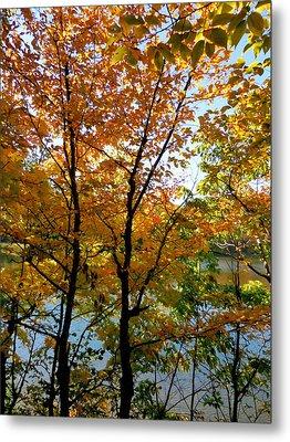 Lake View Through Autumn Tree 2 Metal Print