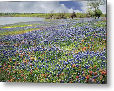 Metal Print featuring the photograph Lakeside Texas Bluebonnets by David and Carol Kelly