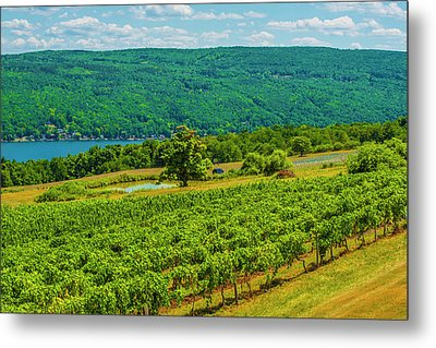 Metal Print featuring the photograph Lakeside Vineyard I by Steven Ainsworth