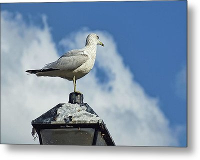 Metal Print featuring the photograph Lamp Post Eddie by Jan Amiss Photography