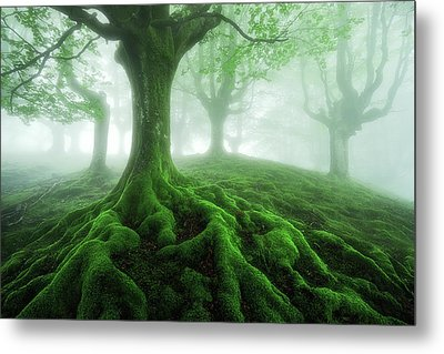 Land Of Roots Metal Print by Mikel Martinez de Osaba