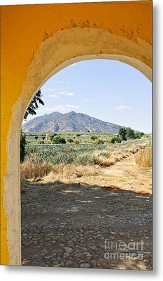 Landscape With Agave Cactus Field In Mexico Metal Print by Elena Elisseeva