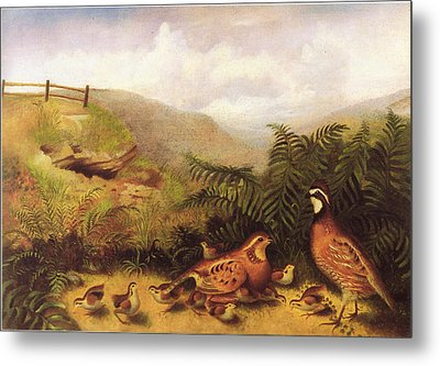 Landscape With Quail Cock Hen And Chickens Metal Print by MotionAge Designs