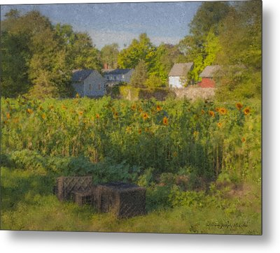 Langwater Farm Sunflowers And Barns Metal Print by Bill McEntee