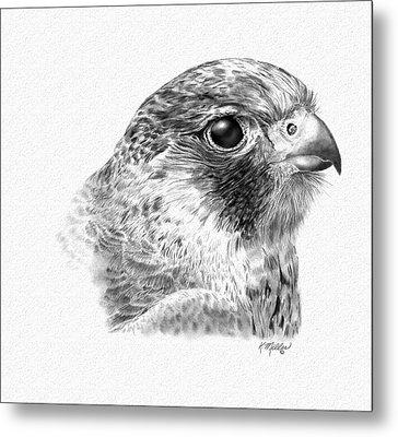Lanner Falcon Metal Print