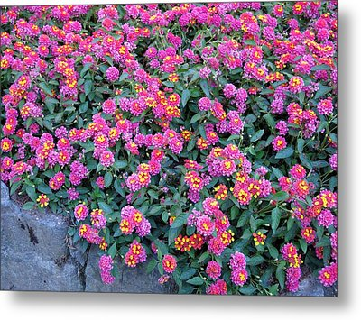 Lantana Metal Print by Betty Buller Whitehead