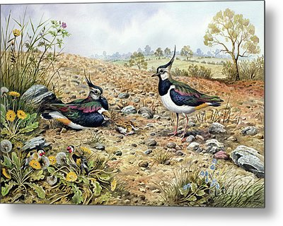 Lapwing Family With Goldfinches Metal Print