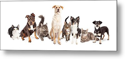 Large Group Of Cats And Dogs Together Metal Print