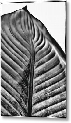 Large Leaf Metal Print