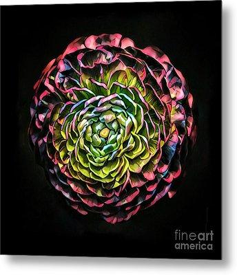 Large Pink Flower Against Black Background Metal Print