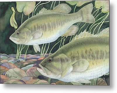 Largemouth Bass Metal Print by Paul Brent