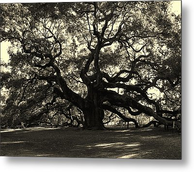 Last Angel Oak 72 Metal Print