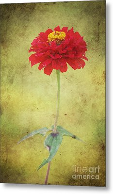 Last Days Of Summer Metal Print by Angela Doelling AD DESIGN Photo and PhotoArt