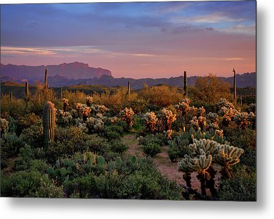 Metal Print featuring the photograph Last Light On The Sonoran  by Saija Lehtonen