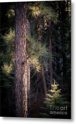 Metal Print featuring the photograph Last Light by The Forests Edge Photography - Diane Sandoval