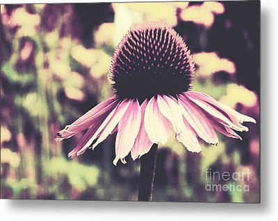 Last Summer Metal Print by Angela Doelling AD DESIGN Photo and PhotoArt
