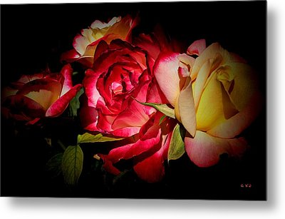 Last Summer Roses Metal Print by Gabriella Weninger - David