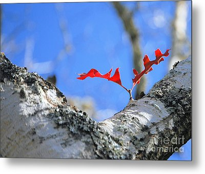 Metal Print featuring the photograph Last To Leaf by Debbie Karnes