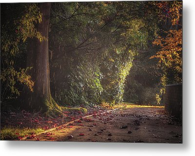 Late Afternoon Autumn Shower Metal Print