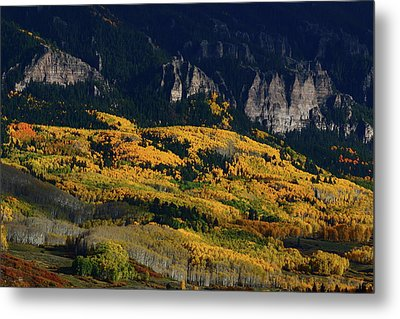 Metal Print featuring the photograph Late Afternoon Light On Aspen Groves At Silver Jack Colorado by Jetson Nguyen