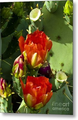 Late Bloomer Metal Print