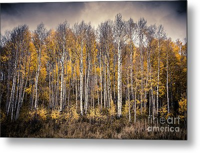 Metal Print featuring the photograph Late Fall by The Forests Edge Photography - Diane Sandoval